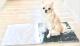 ひんやりマット大理石 ペルリーノキャロ板目 400×400×13