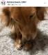 コラーゲン皮ガム 25g  犬用   【昔ながらの「なめし加工」で仕上げた無添加の鹿皮ガム!噛んで遊ぶ楽しいおやつ】