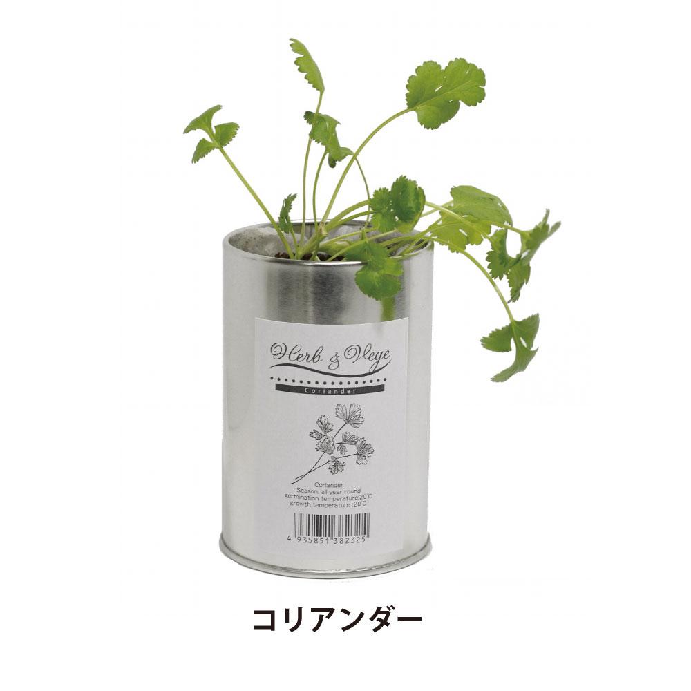 【栽培キット】ハーブ&ベジS 4個セット   バジル イタリアンパセリ コリアンダー ペパーミント