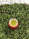 静岡県藤枝産の特徴ある3種の味が楽しめる【藤栄製茶】FUJIEDA OMOCHA[3gタグ付T-Bag-12ヶ×3種(松・藤・鶯)]