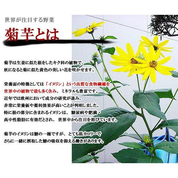 国産 焙煎 菊芋粉末 菊芋パウダー 70g