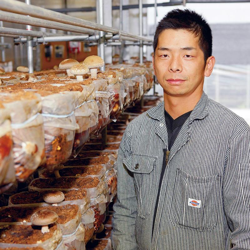 エピナール那須×渡辺きのこ園 生しいたけ 大椎茸 1kg