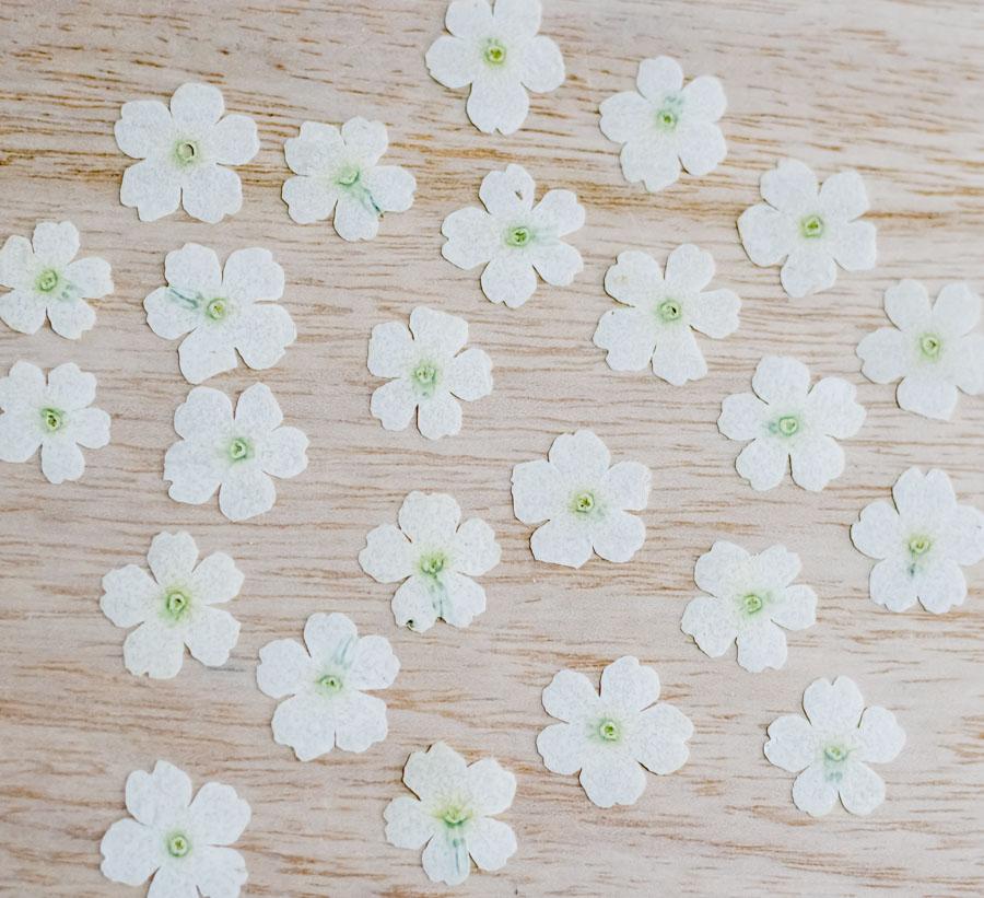 1-121-WY 押し花 バーベナ ホワイト染