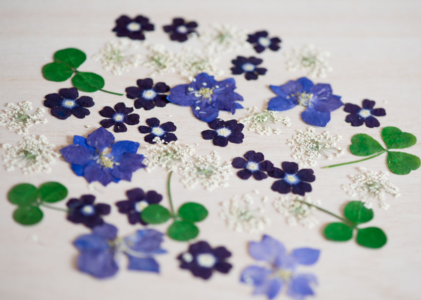 1-B ブルーミックス押し花デザインパック 40輪入り
