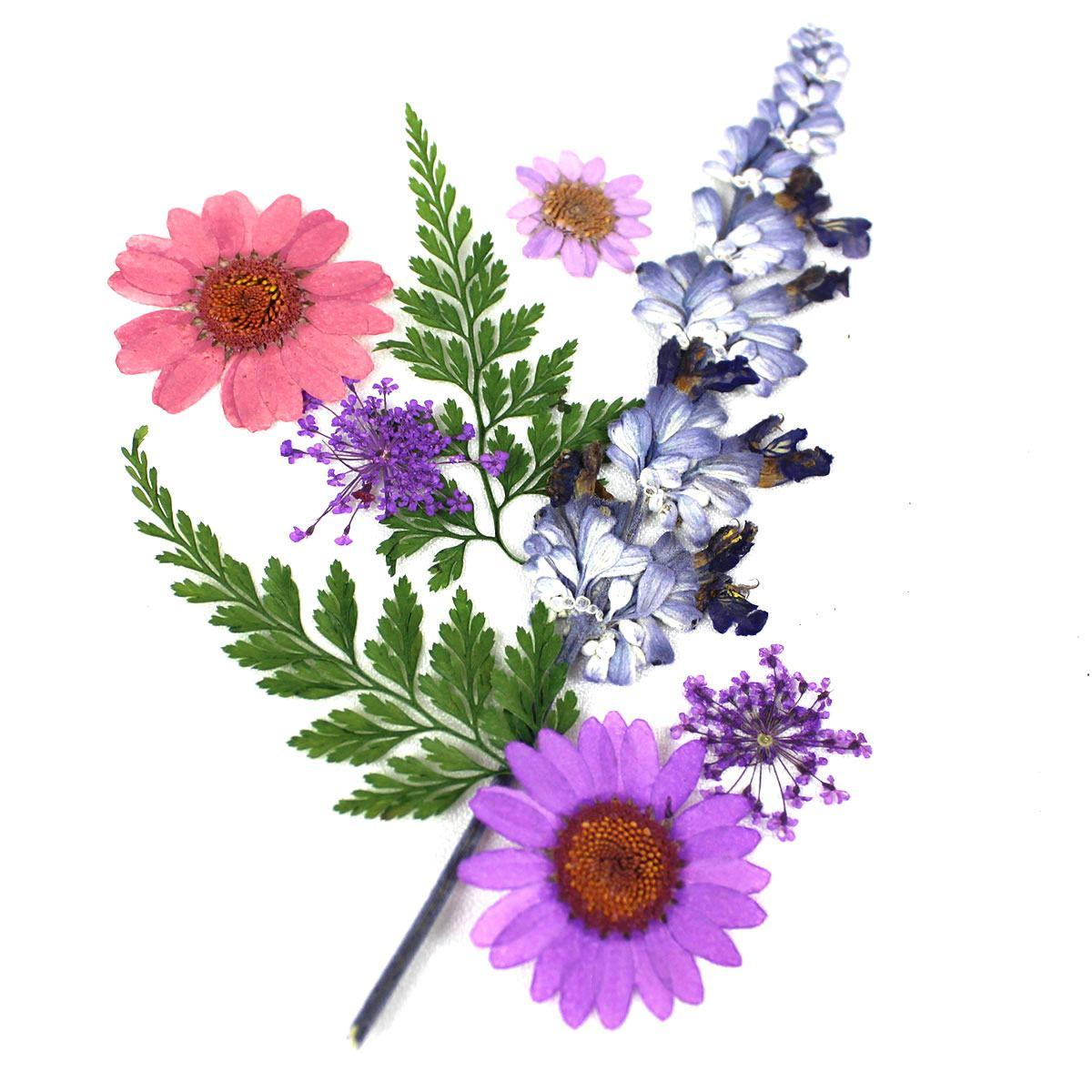 1-08A 押し花素材 押し花セット(A)