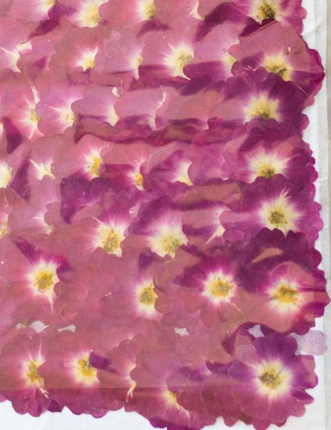 2-119P(2175A) 押し花 ミニバラ パープル