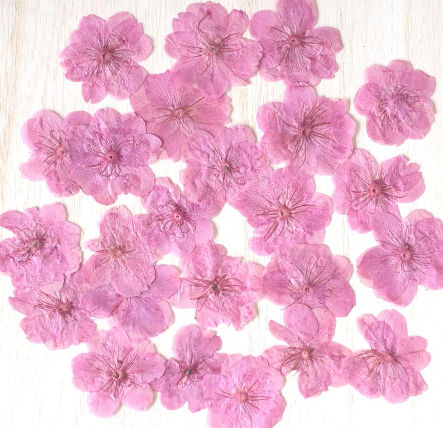 1-010Y 桜 ピンク染