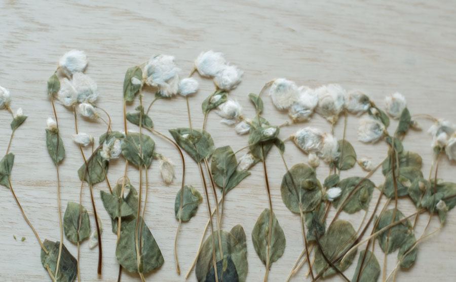 1-147H-W ロータンセ蕾 葉付 ホワイト