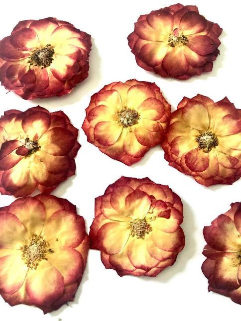1-119LR 薔薇 赤 8輪