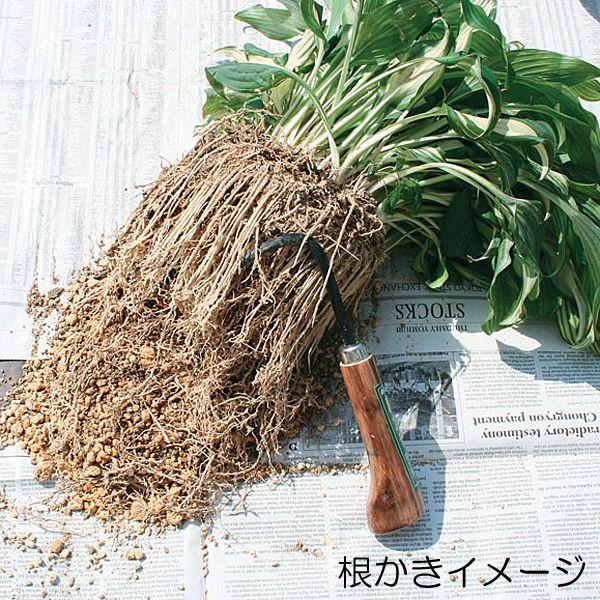 根さばき 根かき 3本爪 高級感のある焼木柄 丈夫な本焼入 Garden Helper 257 園芸用品 ガーデニンググッズ 根っこの土をかき取る道具
