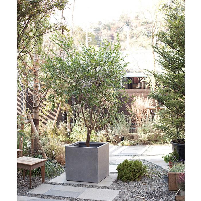 プランター 植木鉢 大型 ファイバープランター ベータ 36×36×36cm ガーデニング 園芸用品