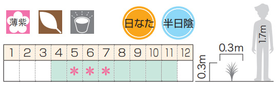 ギボウシ(擬宝珠)ホスタ・エレガンス(大株) 外斑入り 植木 庭木 多年草