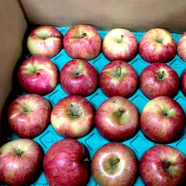 【特別栽培】ジュース用りんご5kg(青森県産・わけあり)_s26