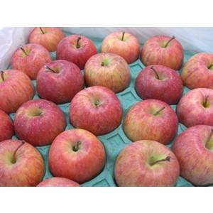 【特別栽培】ジュース用りんご10kg(青森県産・わけあり)(送料無料)_s26