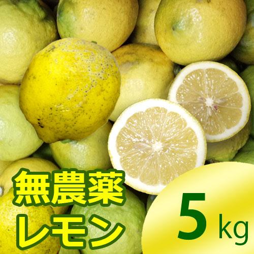 国産レモン5kg前後(無農薬・有機栽培同等品)(防腐剤不使用)(ノーワックス)_s26