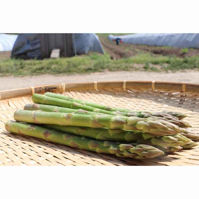有機栽培グリーンアスパラ1kg(Lサイズ)(北海道産)(送料無料)<2021年4月20日受付開始>_s25