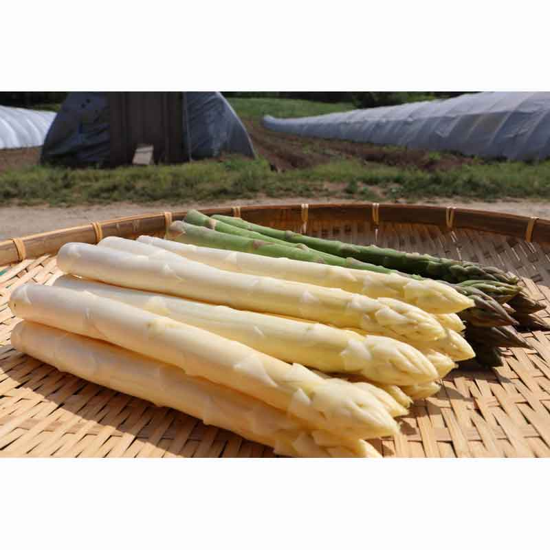 有機栽培グリーン&ホワイトアスパラ1kg(Lサイズ)(北海道産)(送料無料)<2021年4月20日受付開始>_s25