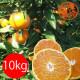 【有機栽培】佐藤さん家の温州みかん10kg佐賀県産(送料無料)(サイズS〜L)_s22