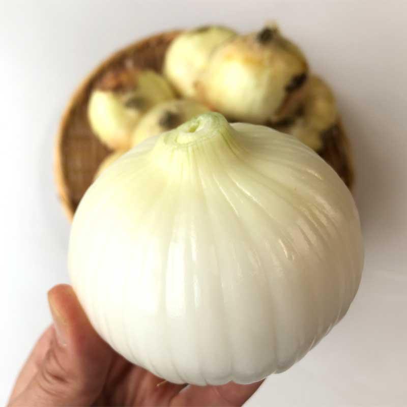 塩たまちゃん5kg(熊本県産)(特別栽培・慣行栽培)<2021年4月6日受付開始>_s25