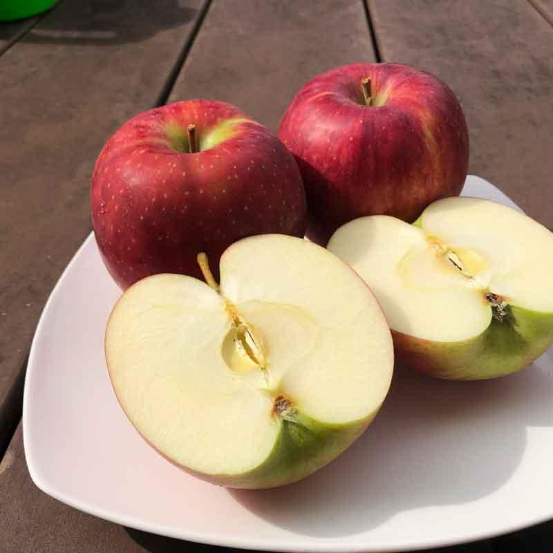 福士さんのりんご特選サンつがる10kg(青森県産)(送料無料)(特別栽培)<数量限定>_s25