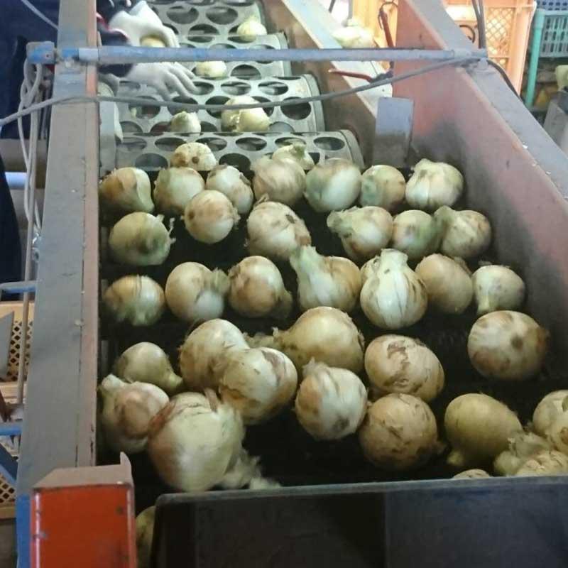 塩たまちゃん10kg(熊本県産)(特別栽培)<2021年6月2日まで受付>_s25