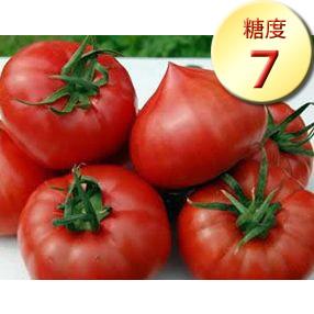 純情ハート1kg(完熟・糖度7度以上)たかしまフルーティトマト(送料無料)<2021年4月5日まで受付>_s28