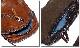 EVERSOUL PLUS SELECT ボディバッグ メンズ レザー 本 革 ワンショルダー 革 おしゃれ  カウレザー 収納 ジップ バッグ  茶 ブラウン 斜めがけ 男性