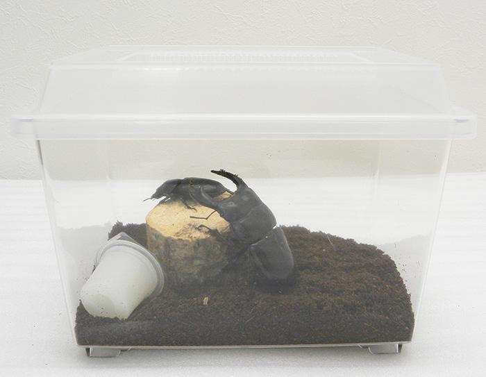 産卵セット ペアリングケース