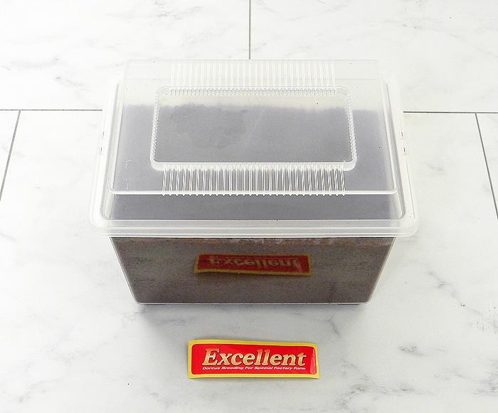 エクセレントオリジナル 産卵セット