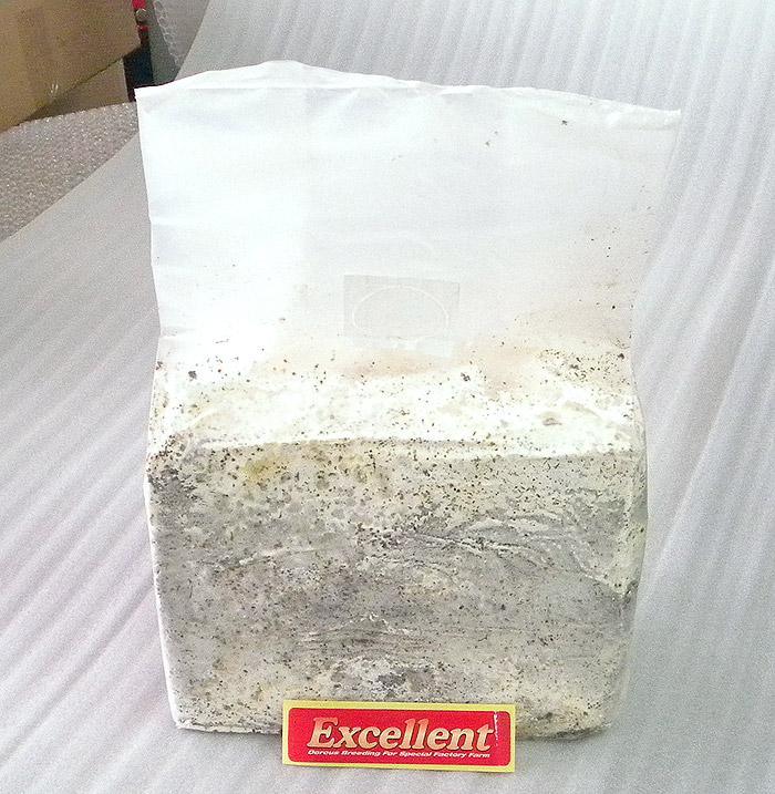 エクセレントオリジナル 菌糸ブロック