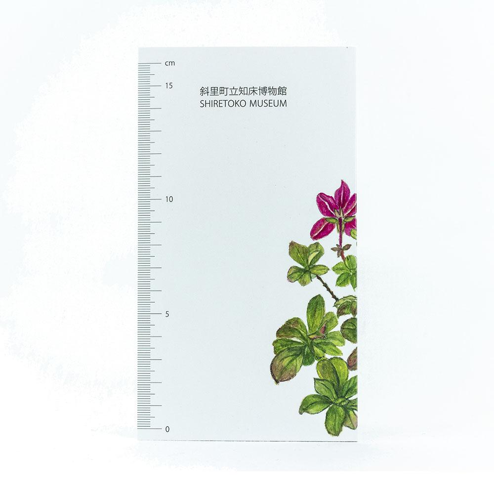 知床の高山植物
