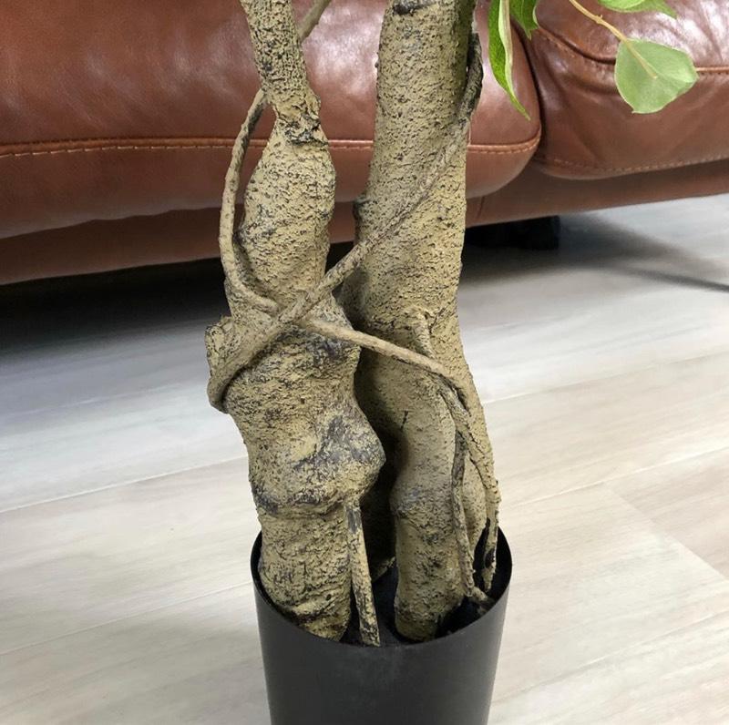 【送料無料♪】葉っぱわさわさの木