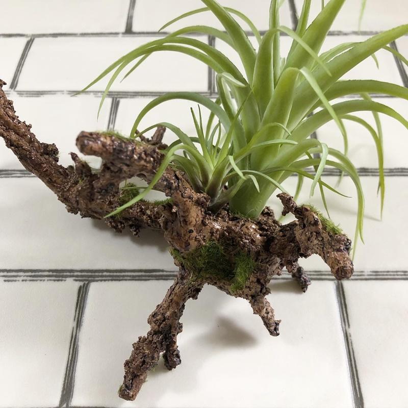 ごつごつ枝のティランジア