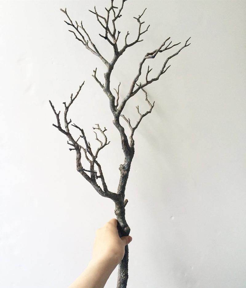 ごつごつ木の枝