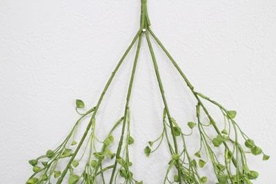 ラッパ型の葉っぱのモフモフ