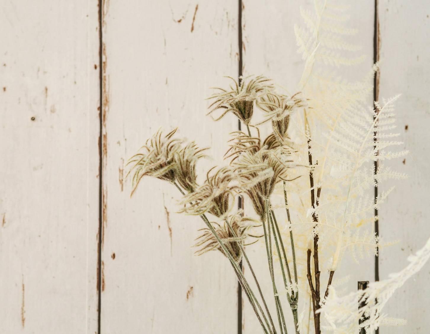 アスパラガスの白い葉っぱ