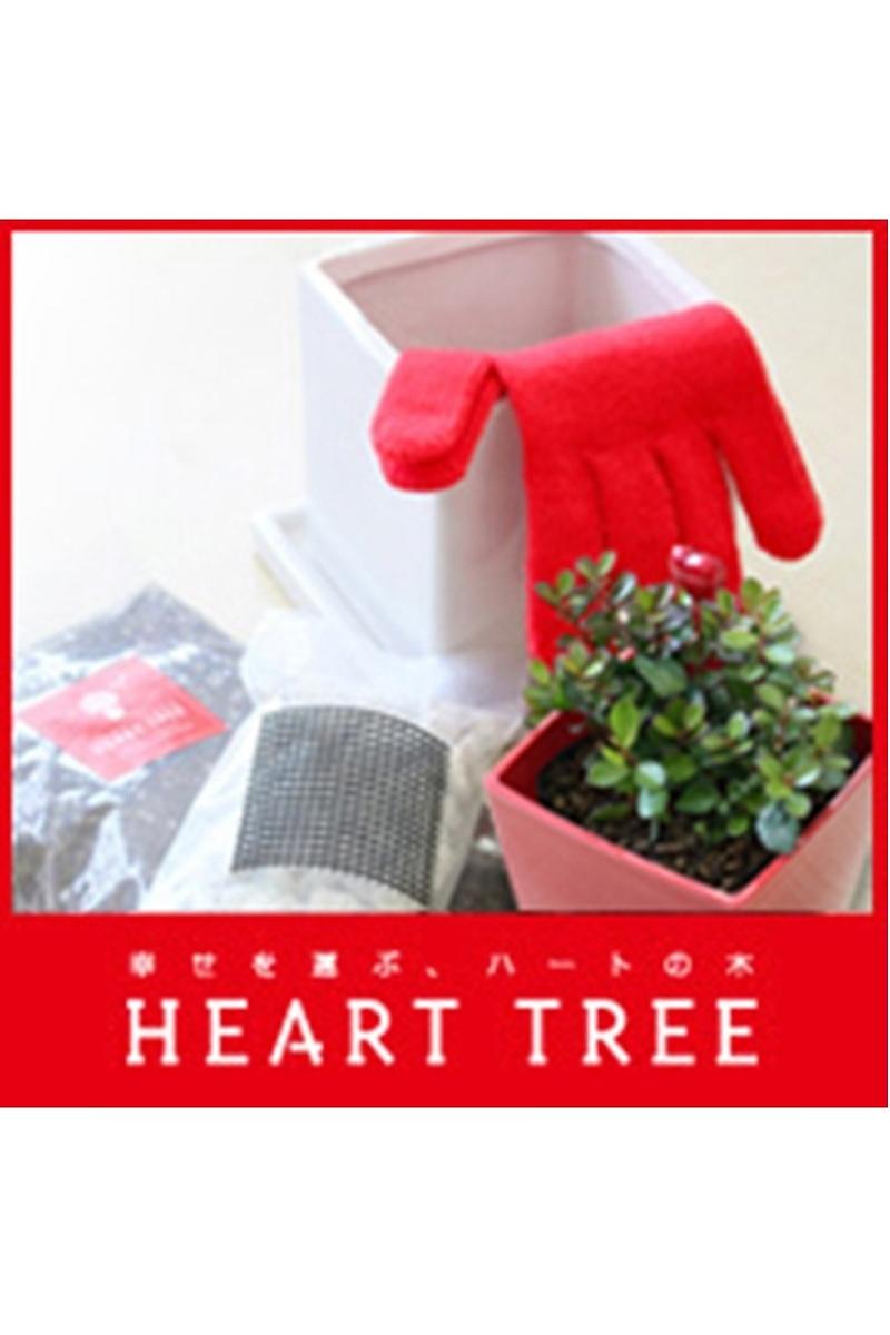 ハートツリー(HEART TREE) 植替えセット(土・苗・鉢付き)