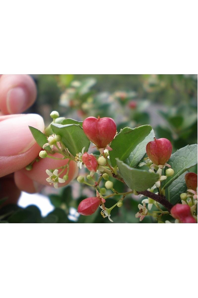ハートツリー(HEART TREE)