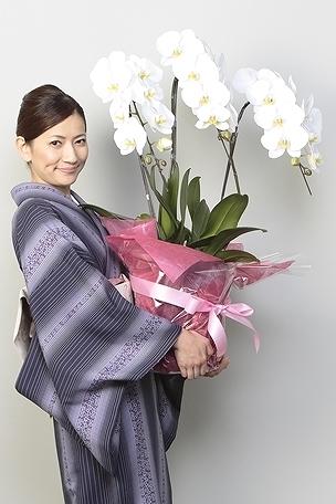 【産地直送】京都 胡蝶蘭(白大輪) 3本立S