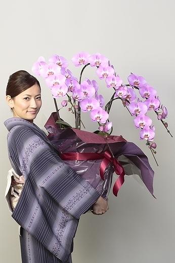 【産地直送】京都 胡蝶蘭(ピンク大輪) 5本立M