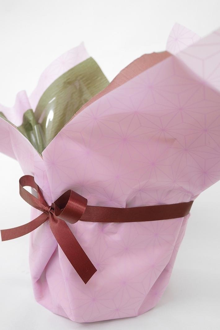 【2021年母の日数量限定】 ミニ胡蝶蘭(ミディ) タンブラー 濃ピンク 1本立
