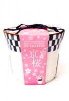 【2021年母の日】 京都小鉢(ミニ盆栽) 種栽培セット 京桜・京紅葉・京松セット