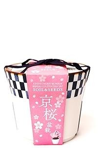 京都小鉢(ミニ盆栽) 種栽培セット 京桜