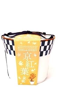 京都小鉢(ミニ盆栽) 種栽培セット 京紅葉