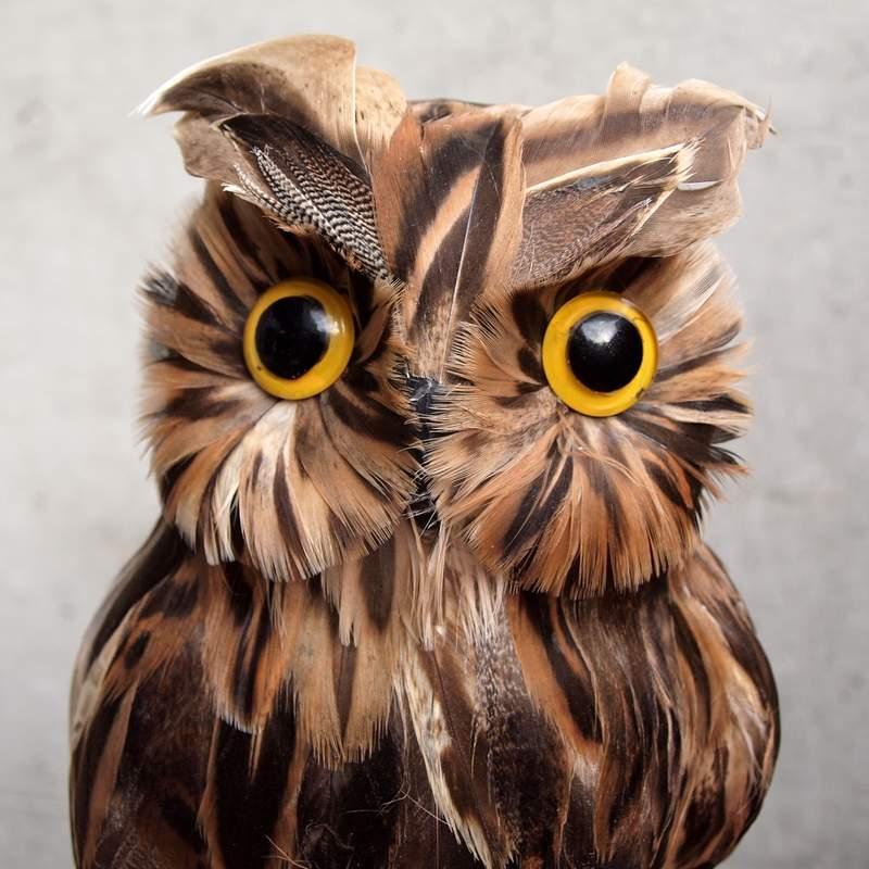 PUEBCO Artificial Birds Owl プエブコ アーティフィシャルバード フクロウ Lサイズ