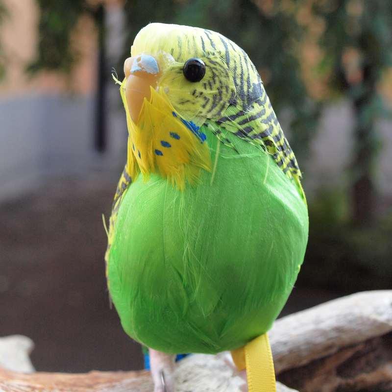PUEBCO Artificial Birds Budgie プエブコ アーティフィシャルバード インコ グリーン