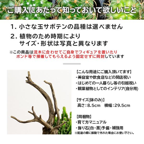 サボテンギフト 寄せ植え 流木タイプ 電磁波サボテン セレウス 選べる動物フィギュア付