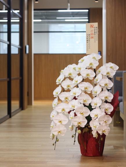 胡蝶蘭 3本立て 50輪