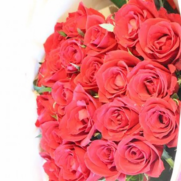 Red Roses 24