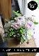 白菫 ~ 生命力溢れるシャビーシックなアレンジを、エレガントな季節のお薦め花材とリーフ花器でご用意しました。 ~ [ アレンジメント M size ]